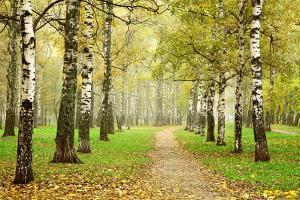 Pathway in Autumn Fog Birch Forest by LeniKovaleva