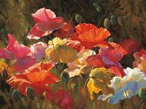 Poppies in Sunshine-Leon Roulette-Art Print
