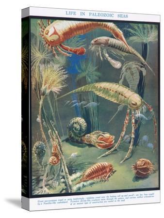 Life in Paleozoic Seas, Illustration from 'The Science of Life'