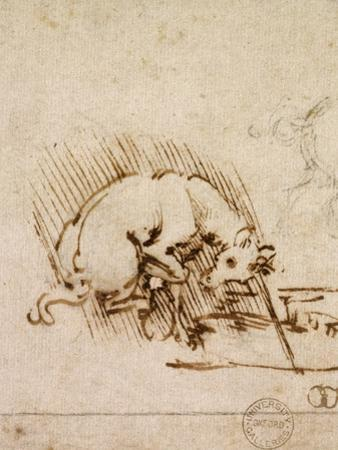 A Unicorn Dipping its Horn into a Pool of Water, C.1481