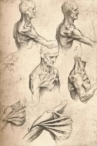Anatomical Drawing, C1472-C1519 (1883) by Leonardo da Vinci