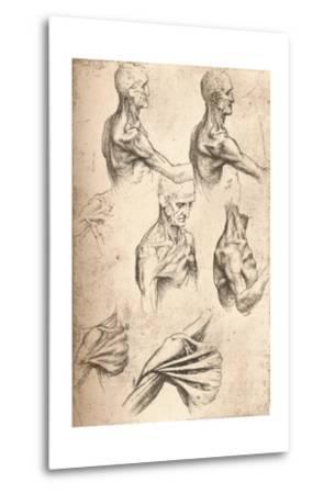 Anatomical Drawing, C1472-C1519 (1883)