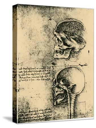 Anatomical Sketch; Two Studies of a Human Skull, C1489