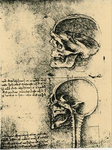 Anatomical Sketch; Two Studies of a Human Skull, C1489 by Leonardo da Vinci