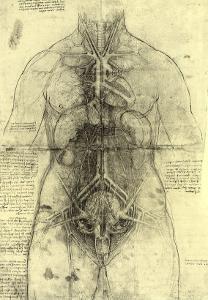 Anatomical Structure by Leonardo da Vinci