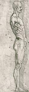 Anatomical Study by Leonardo da Vinci