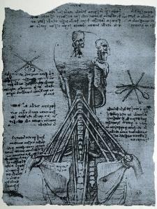 Bone Structure of the Human Neck and Shoulder, Facsimile Copy by Leonardo da Vinci