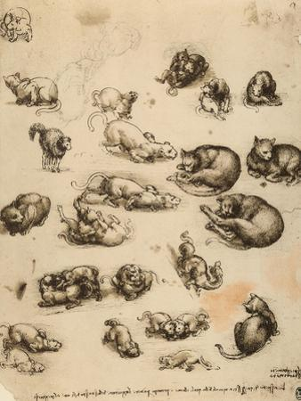 Cats, Lions and Dragons, Drawing, Royal Library, Windsor