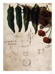 Cherries and Peas, Institut De France, Paris by Leonardo da Vinci