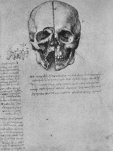 'Drawing of Two Halves of a Skull', c1480 (1945) by Leonardo da Vinci