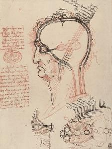 Head Section with the Anatomy of the Eye, Drawing, Royal Library, Windsor by Leonardo da Vinci