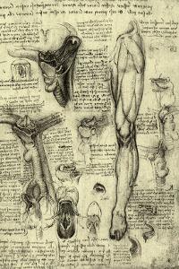 Human Anatomy by Leonardo da Vinci