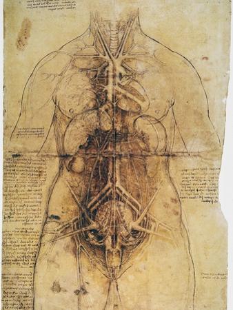 Leonardo: Anatomy, C1510