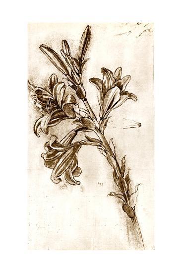 Leonardo Da Vinci's Lilies.-Sheila Terry-Giclee Print