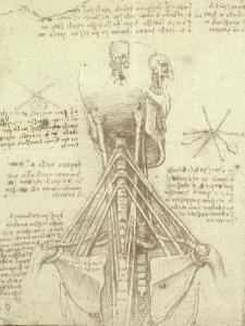 Spinal Column Study by Leonardo da Vinci