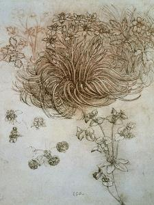 Star of Bethlehem, Wood Anemone and Sun Spurge by Leonardo da Vinci