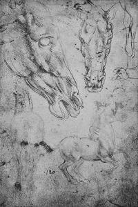 'Studies of Horses and of Horses' Heads', c1480 (1945) by Leonardo da Vinci