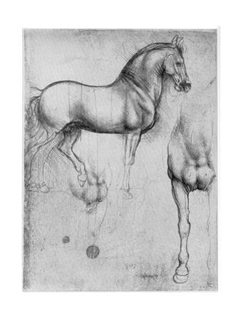 Studies of Horses, C1490 by Leonardo da Vinci