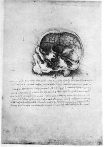 Study of a Human Skull, Late 15th or Early 16th Century by Leonardo da Vinci