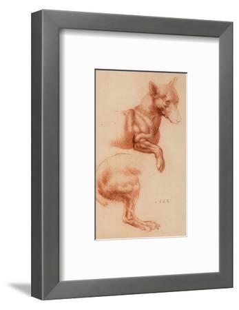 Study of a Pomeranian Dog, Drawing, Royal Library, Windsor