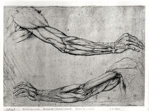 Study of Arms by Leonardo da Vinci