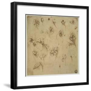 Study of Flowers by Leonardo da Vinci