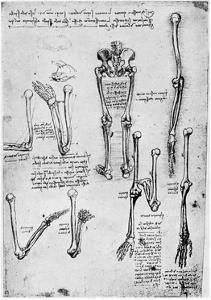 Study of Human Bones, Late 15th or 16th Century by Leonardo da Vinci