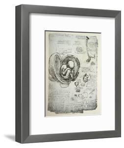 The Human Foetus in the Womb, Facsimile Copy by Leonardo da Vinci