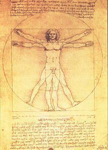 Vitruvian Man Proportions of the Human Figure by Leonardo da Vinci