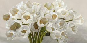 Tulipes blanches by Leonardo Sanna