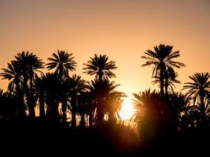 Palm Silhouettes over Sunset in the Desert. Zagora, Morocco, Africa. by LeonardoRC