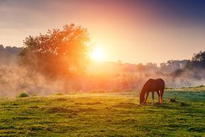 Arabian Horses Grazing on Pasture at Sundown in Orange Sunny Beams. Dramatic Foggy Scene. Carpathia by Leonid Tit