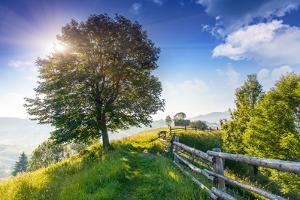 Beautiful Sunny Day is in Mountain Landscape. Carpathian, Ukraine, Europe. Beauty World. by Leonid Tit