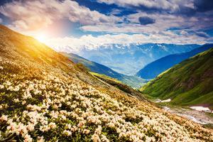 Great View of the Alpine Meadows with Rhododendron Flowers at the Foot of Mt. Ushba. Dramatic Unusu by Leonid Tit
