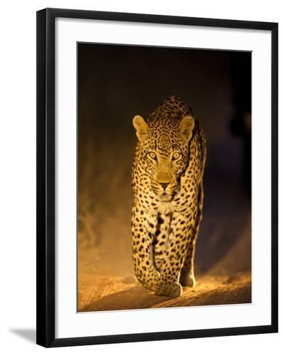 Leopard at Night, Sabi Sabi Reserve, South Africa--Framed Photographic Print