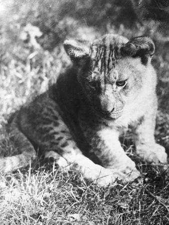 https://imgc.artprintimages.com/img/print/leopard-at-the-zoo_u-l-q1073fg0.jpg?artPerspective=n