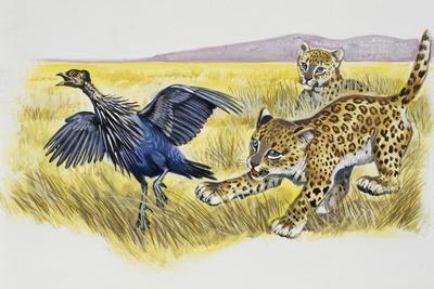 https://imgc.artprintimages.com/img/print/leopard-cubs-panthera-pardus_u-l-puydo60.jpg?p=0