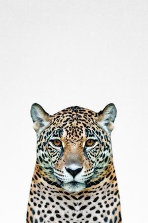 Leopard II-Tai Prints-Framed Art Print