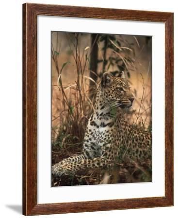 Leopard, Panthera Pardus, Londolozi Game Reserve-Yvette Cardozo-Framed Photographic Print