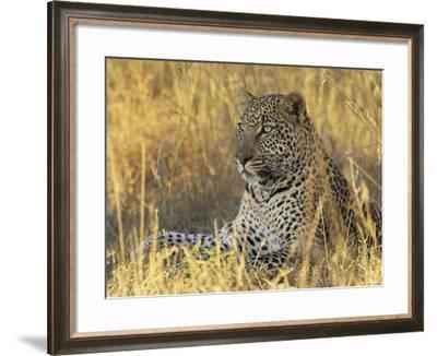 Leopard (Panthera Pardus), Masai Mara National Reserve, Kenya, East Africa, Africa-James Hager-Framed Photographic Print