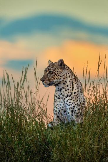 Leopard (Panthera Pardus), Serengeti National Park, Tanzania--Photographic Print