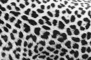 Leopard Patterns