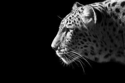 Leopard Portrait-Reddogs-Art Print