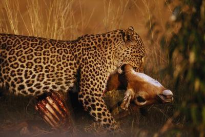 https://imgc.artprintimages.com/img/print/leopard-with-impala-kill_u-l-pzmpd00.jpg?p=0