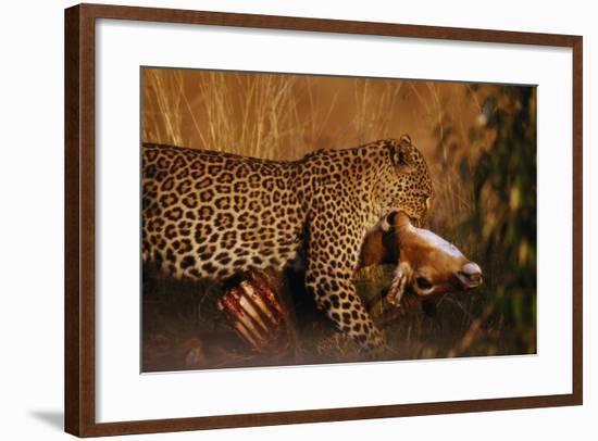 Leopard with Impala Kill--Framed Photographic Print