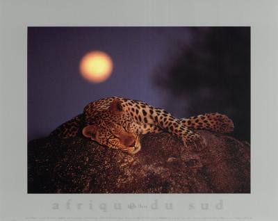 Leopard with Rising Moon- Thom-Art Print