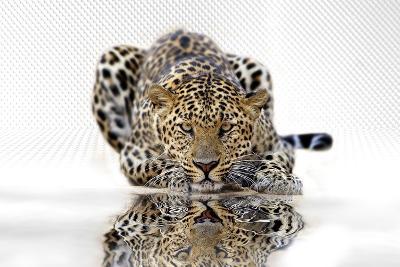 Leopard--Art Print