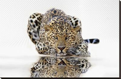 Leopard--Stretched Canvas Print