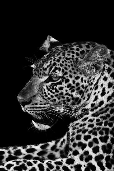 Leopard-Donvanstaden-Art Print