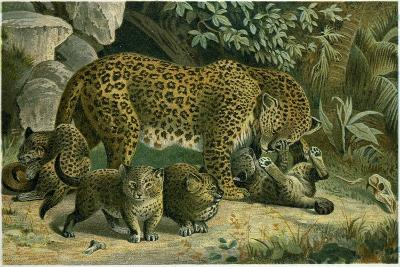 Leopard--Giclee Print